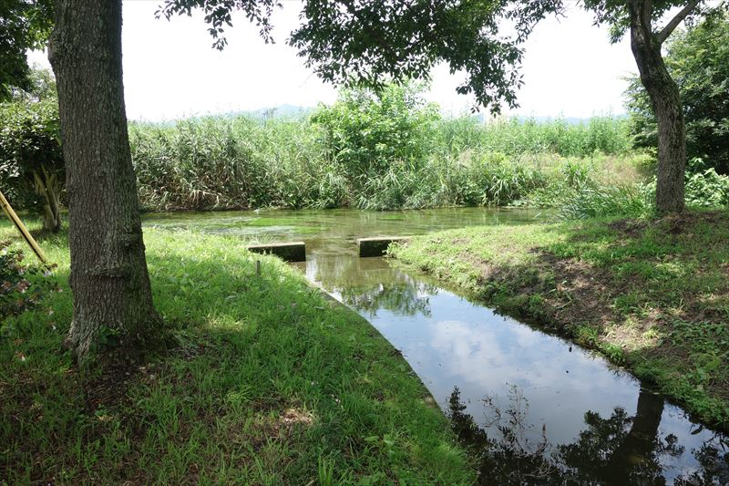 菊川第4公園に流れ込む菊沢川の水