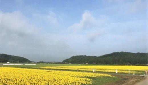 益子町で開催される「ひまわり祭り」の開催日と内容、行った人の感想をチェック