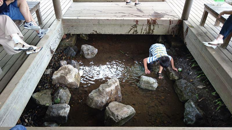 小山総合公園の水辺で沢遊び