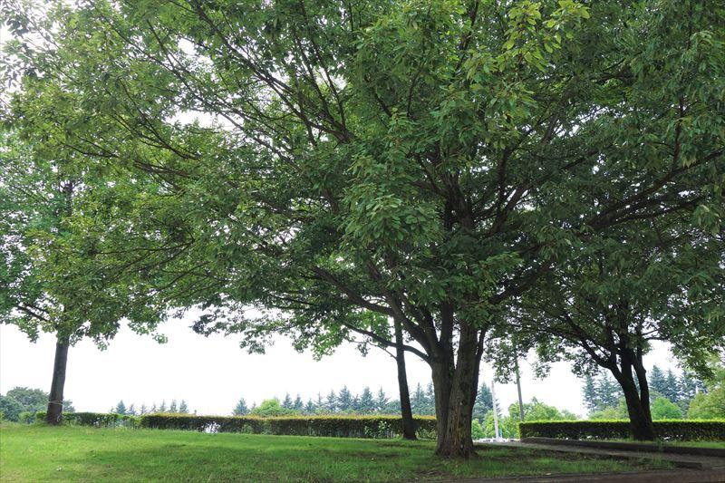 小山総合公園の噴水広場の周りの木陰