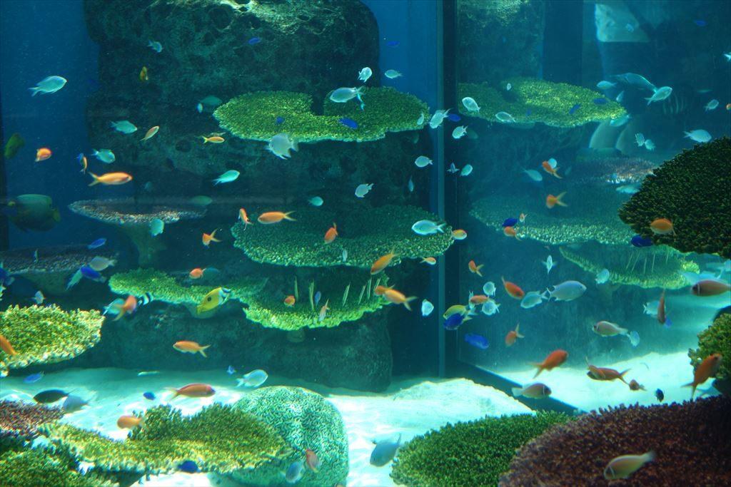 なかがわ水遊園の熱帯魚