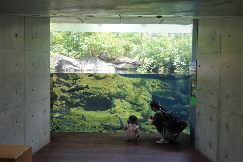 なかがわ水遊園の水槽