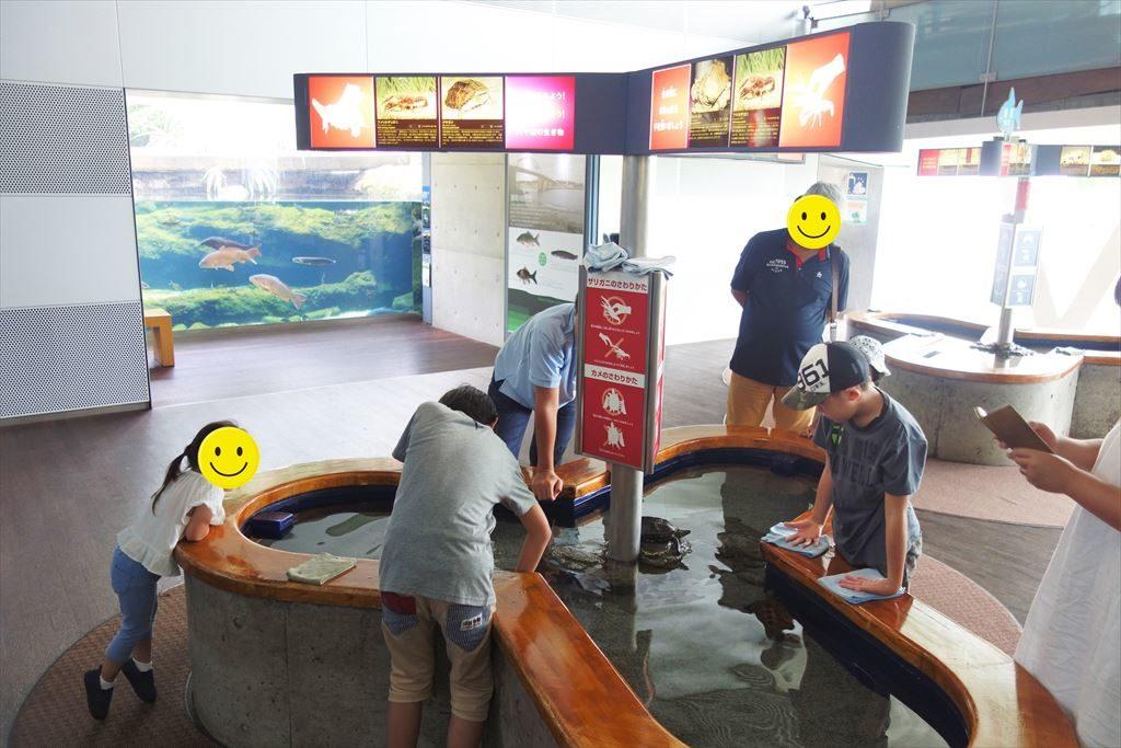 なかがわ水遊園のタッチング水槽コーナー