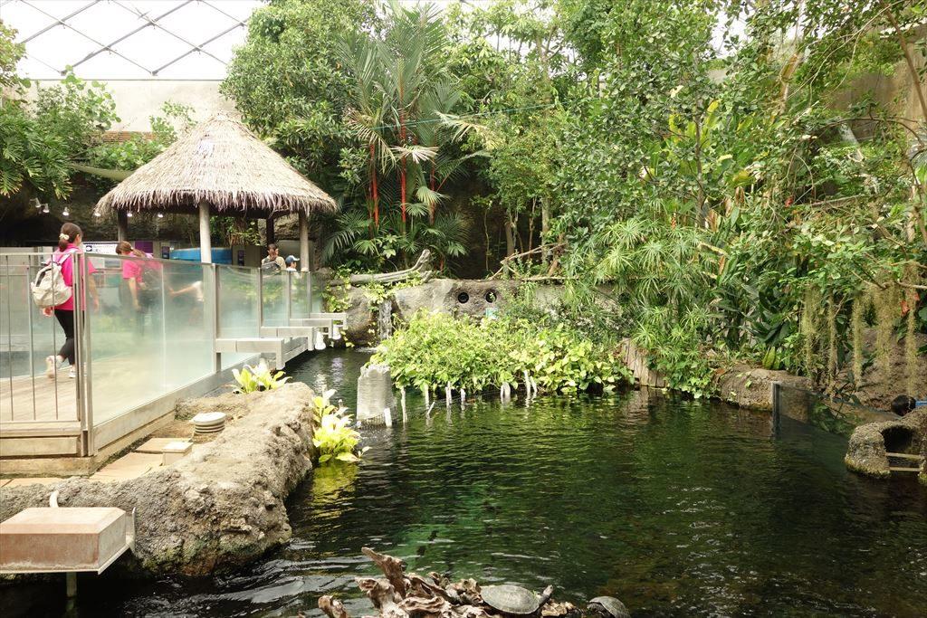 なかがわ水遊園のアマゾンエリア