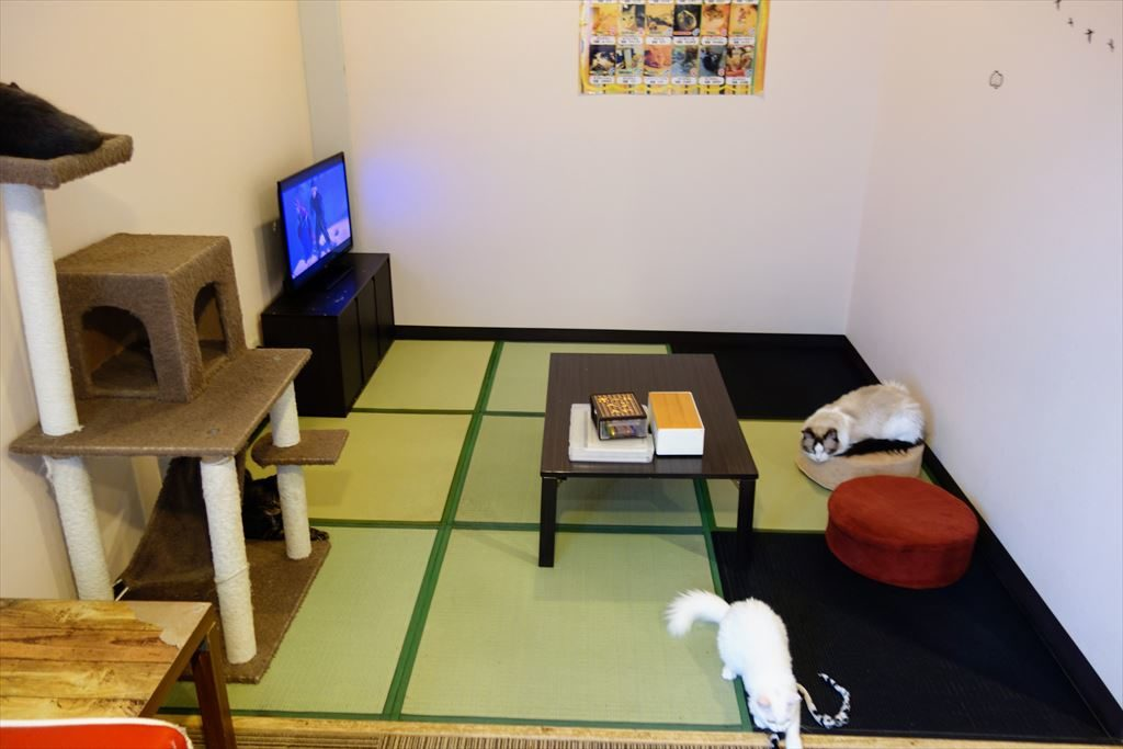 アミパ猫カフェの和室