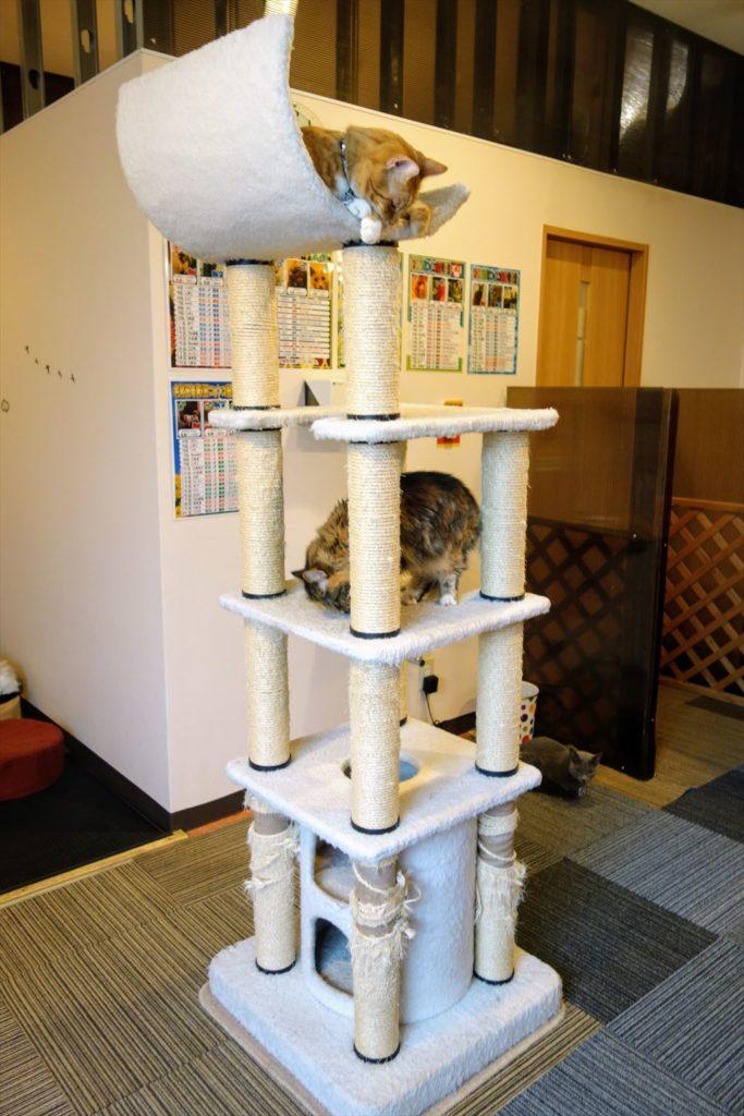 アミパ猫カフェのキャットタワー