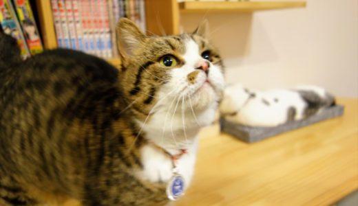 【体験レポート】アミパ佐野店の「猫カフェ」に行ってきました!可愛い猫たちに癒されまくり!