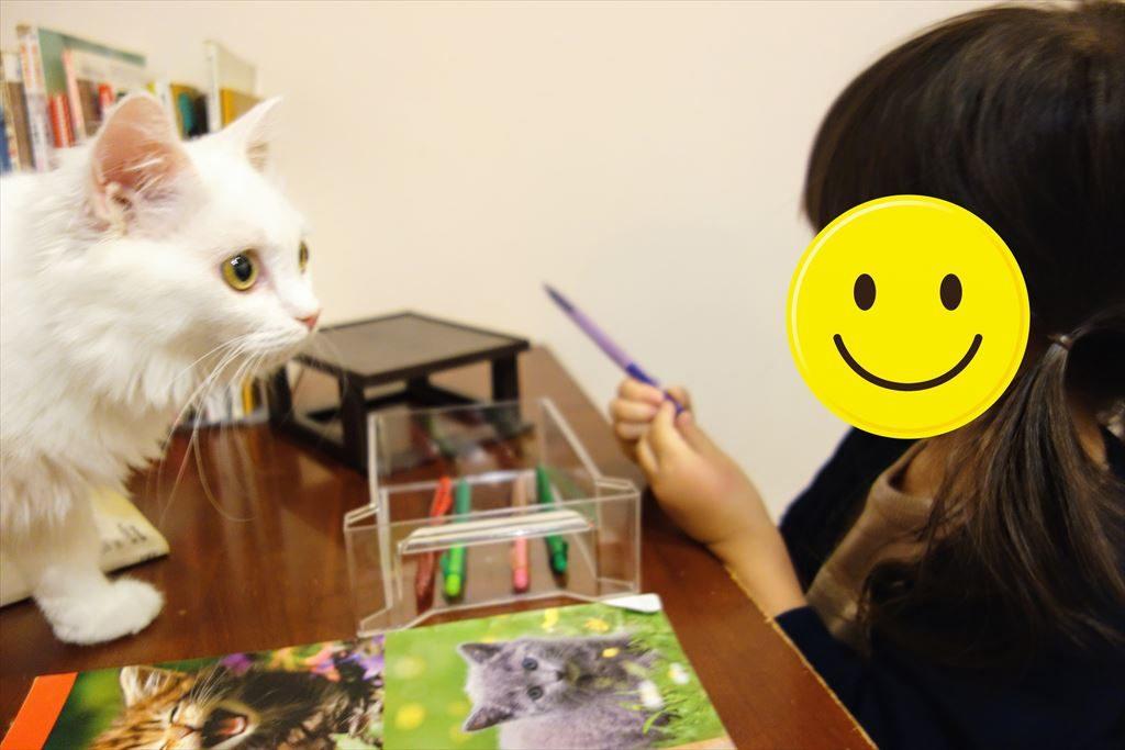 アミパ猫カフェの子猫と遊んでいる様子