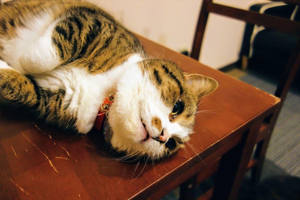 アミパ猫カフェの猫をコチョコチョ