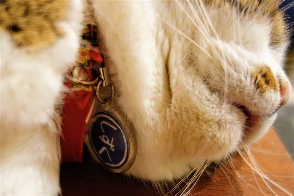 アミパ猫カフェの首輪についているプレート