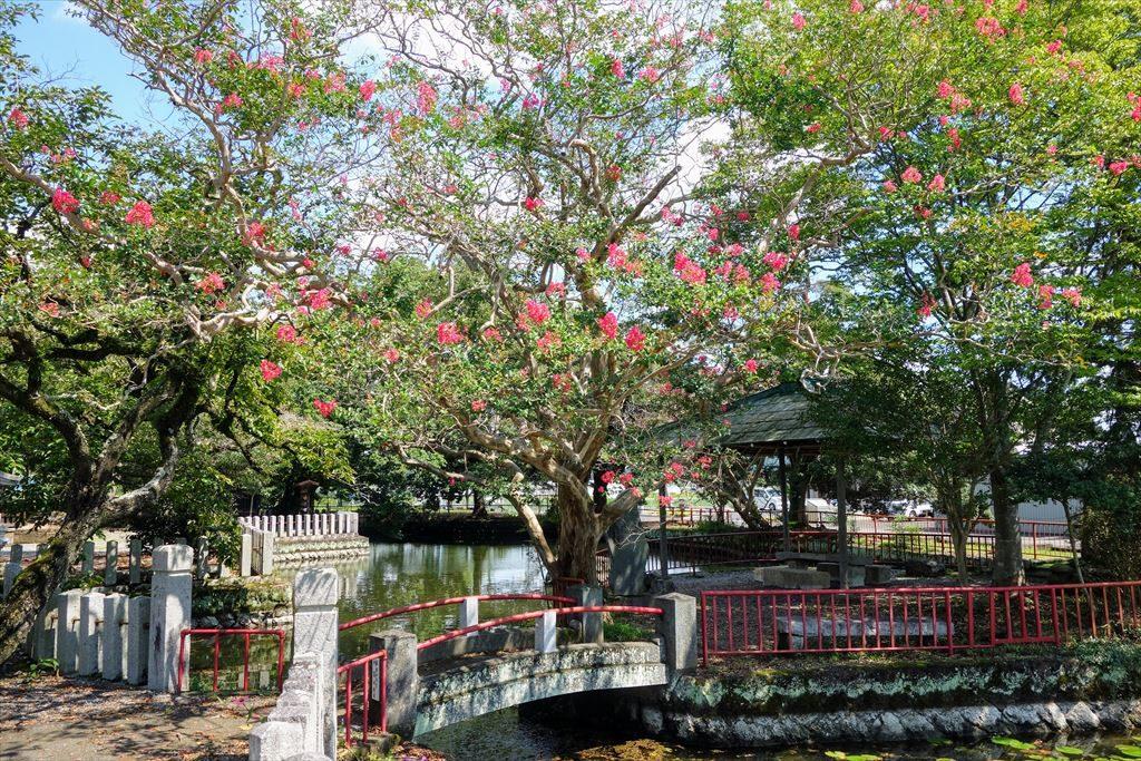 人丸神社の境内に植えられている「さるすべり」