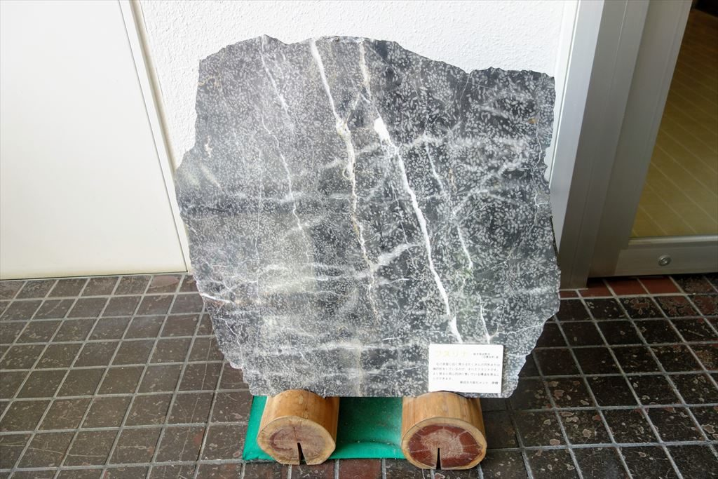 葛生化石館のフズリナ