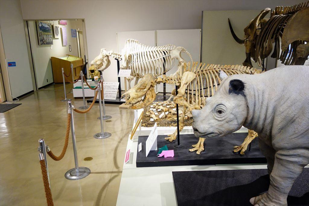 葛生化石館に展示してあるニッポンサイの全身骨格