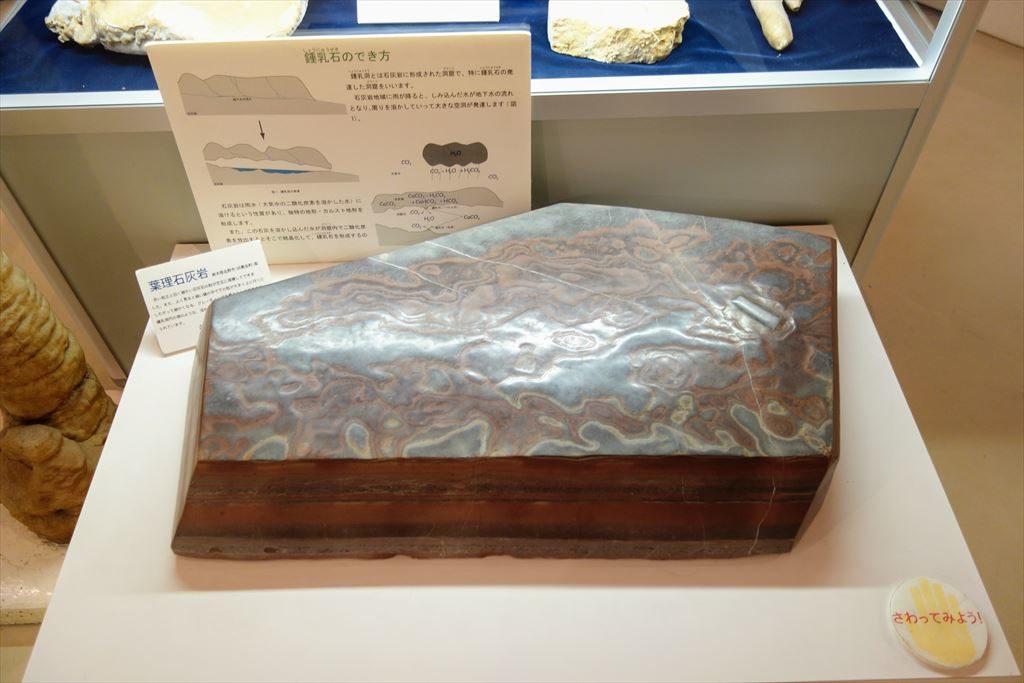 葛生化石館に展示してある葉理石灰岩の標本