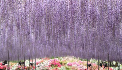 あしかがフラワーパーク|年間の見どころと花の見頃時期を月ごとに紹介します