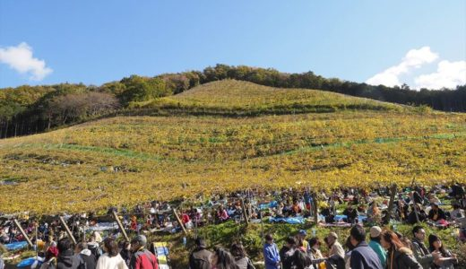 ココ・ファーム・ワイナリー収穫祭の内容と行った人の感想まとめ