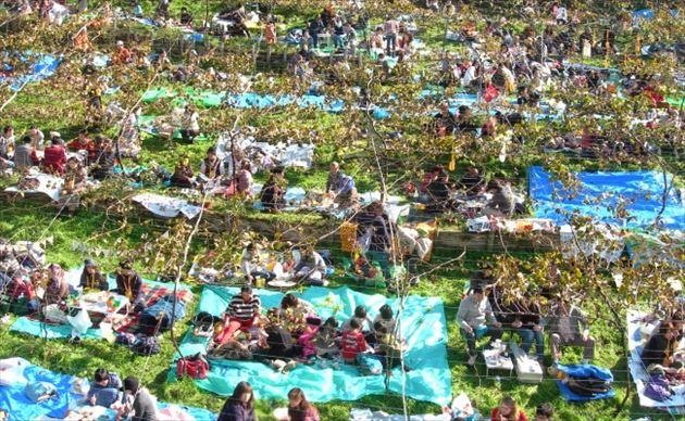 ココ・ファーム・ワイナリー収穫祭の様子