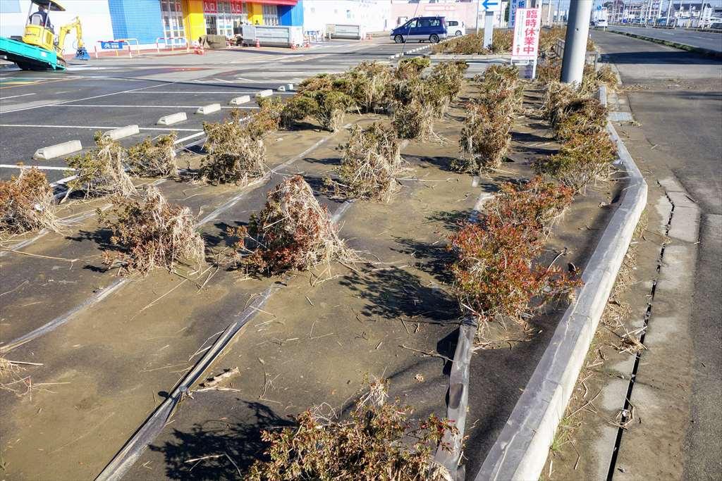 ケーズデンキ栃木大平店の花壇は浸水で全滅
